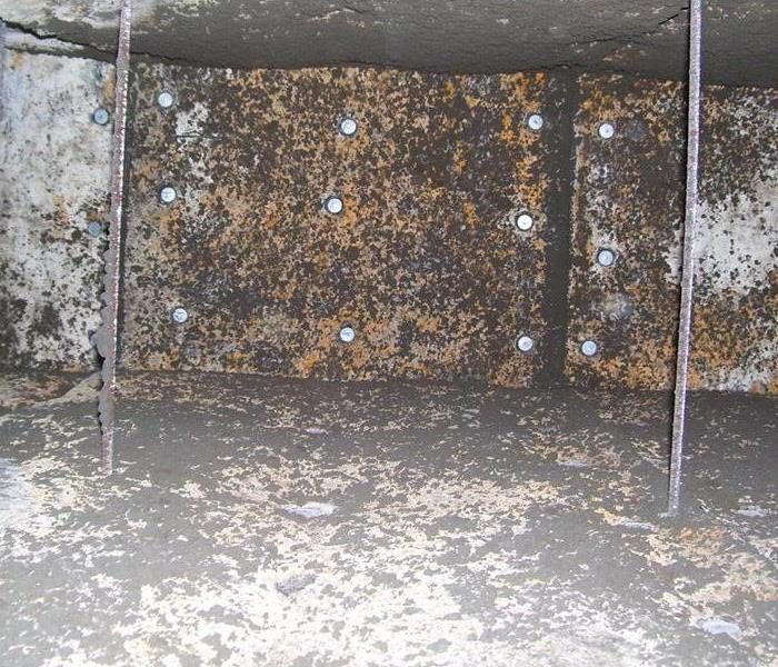 MOLD within the HVAC System