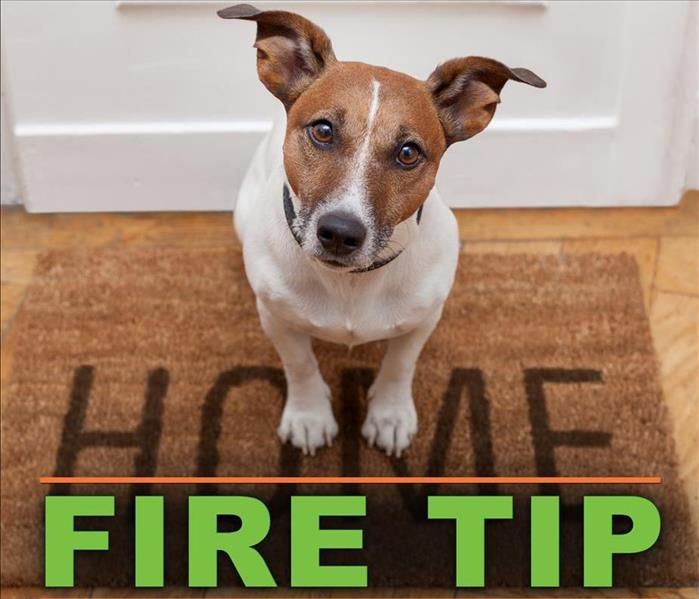 Dog sitting on a carpet bottom of the picture it says FIRE TIP